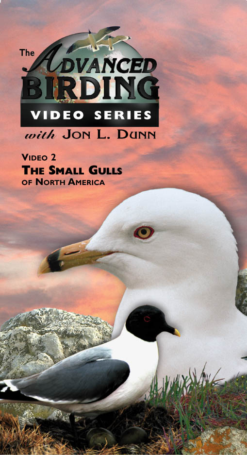 The Small Gulls of North America